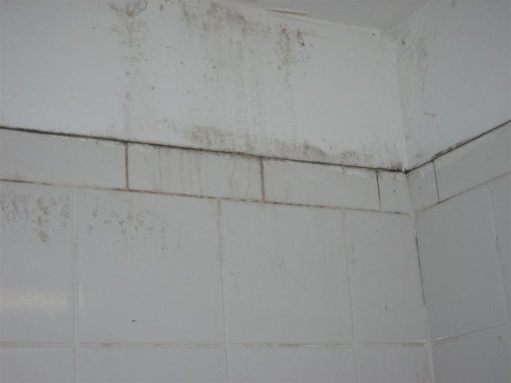 mold testing jacksonville fl