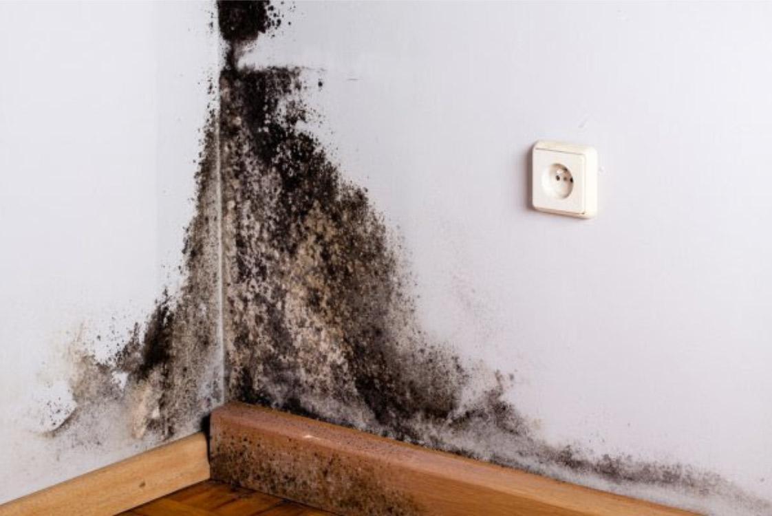 black mold inspection